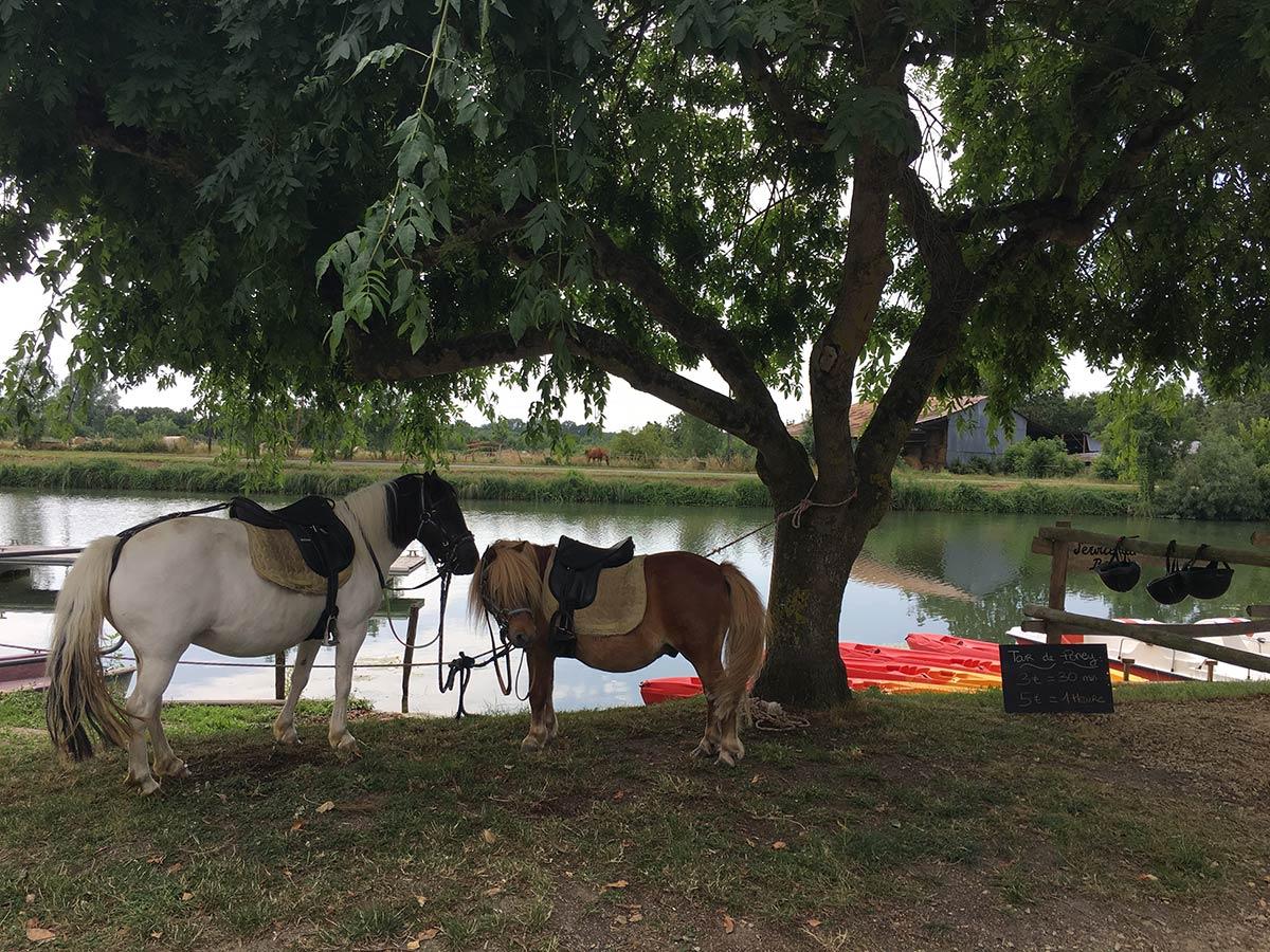 balades à poney dans le marais poitevin